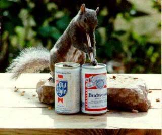 vjeverica-pivo